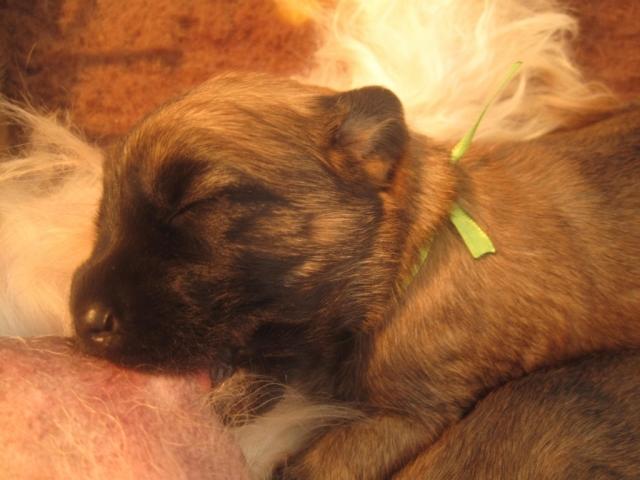 Indy als pup!